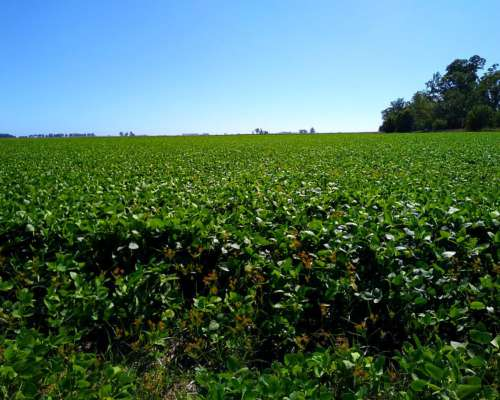 Vendo Excelente Campo Agrícola en Lincoln 122 Hectáreas