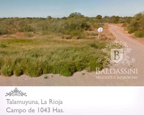 Campo de 1043 Has. en Talamuyuna, la Rioja - Sobre Ruta 38