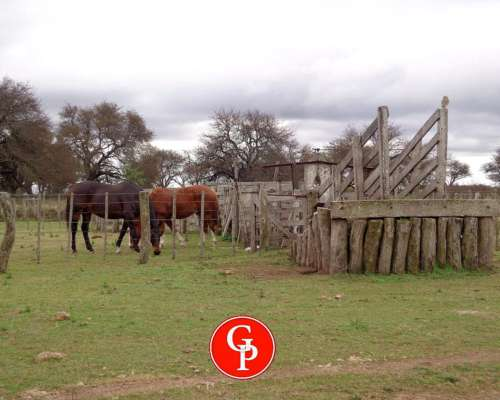 En Venta, 1.020 Has, Rancul - la Pampa -