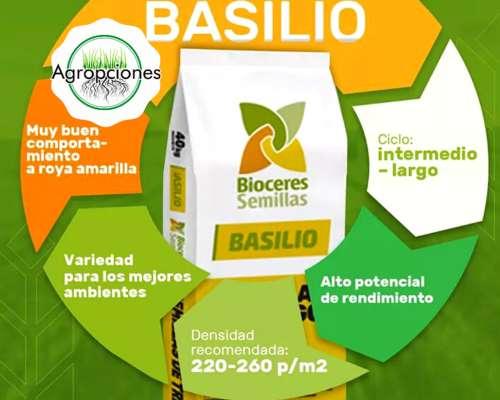 Semilla de Trigo Basilio - Bioceres