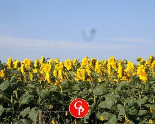 En Venta 302 Has, Cereales - la Pampa -