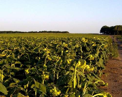 500 Has en Pellegrini Buenos Aires 100 % Agrícola o Invernad