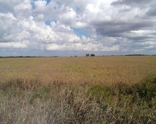Se Busca Campo Agrícola para Alquilar
