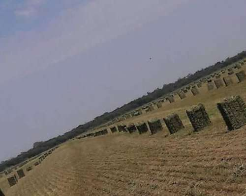 Vendo Fardos de Alfalfa en Cruz del Eje Córdoba