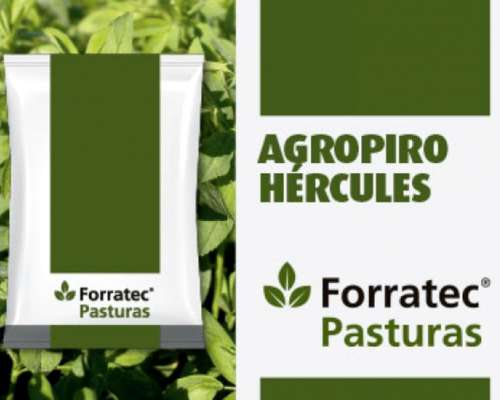 Semilla de Agropiro Hercules - Semillero Forratec