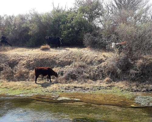 Hermoso Campo en el Valle de Conlara San Luis