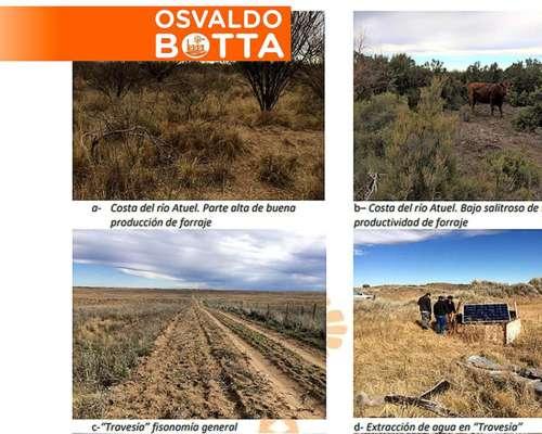 130 Mil Hectáreas en General Alvear, Mendoza