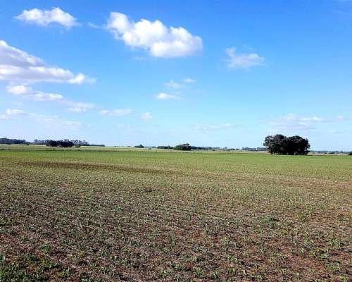 400 Hectáreas Campo Agrícola en Zona Norte