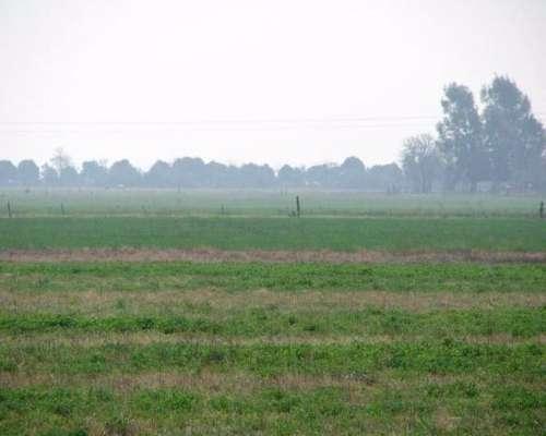Venta de Campo Mixto 3000 Has Castellanos, Santa FE
