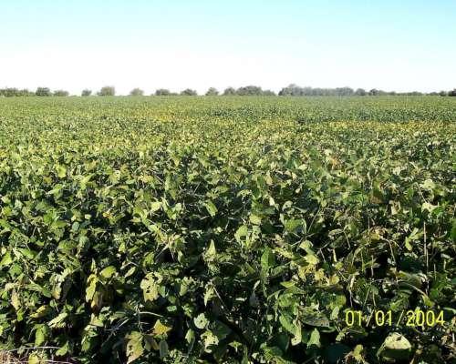 160 Hectareas de Campo Agricola