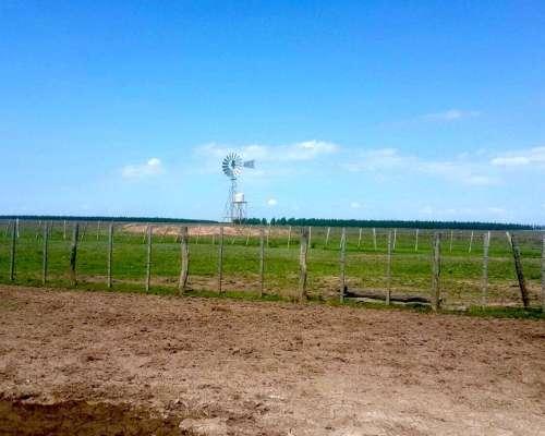 3000 Has Campo Ganadero en Corrientes