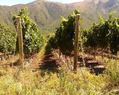 6.100 Has para Viñas - Producción de Agua Mineral y Minería