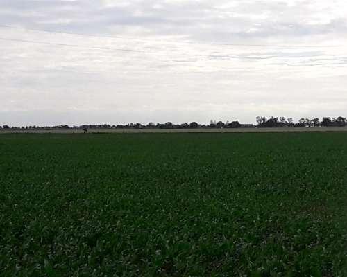 Campo Agrícola o para Desarrollo a 1 km Autovía 19