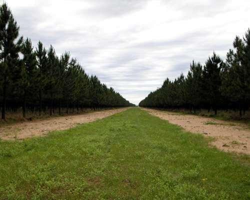 Excelente Forestación Sobre Ruta