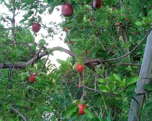 70 Ha Fruta Orgánica Costa Rio Neuquén