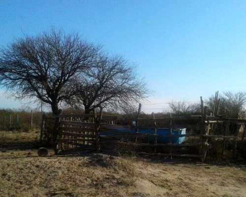 Campo 201 Has Departamento la PAZ Mendoza