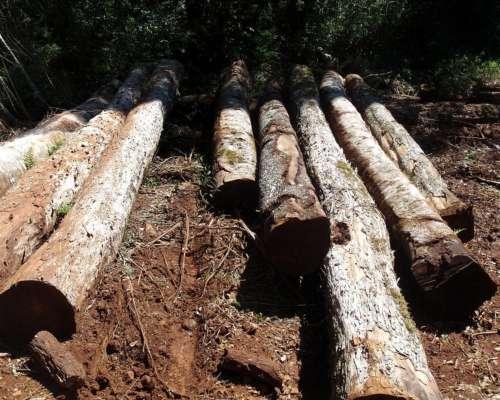 5700 Hectareas, Monte Nativo, Forestacion Pino y Aserradero