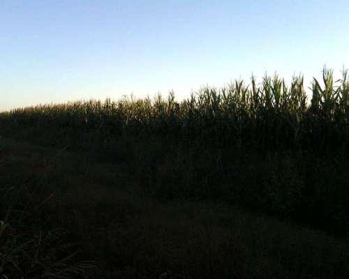 Se Alquilan 2000 H Agricolas Excelentes SUR de Cordoba