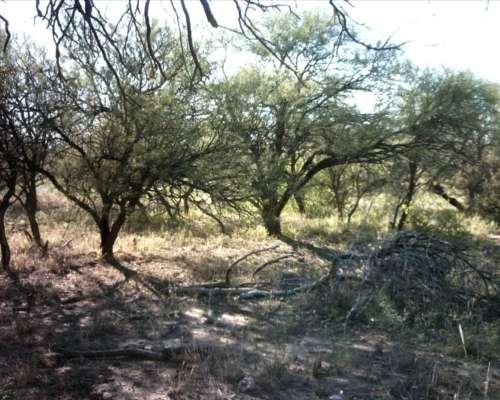 993 Has Ganaderas en Candelaria, San Luis