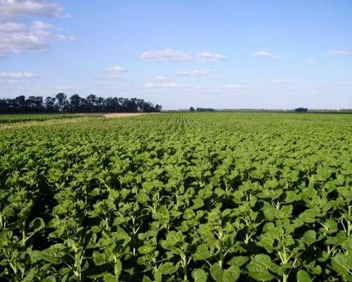 Campo en Venta, 136 Hectáreas, 100 % Agricola, 9 de Julio BA