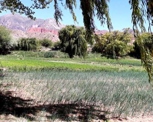 Hectareas en Venta en el Norte de Argentina