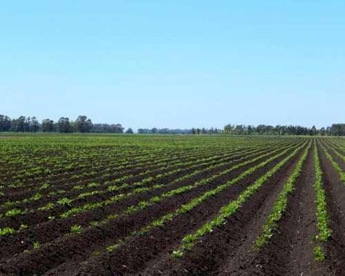 Campo 100 % Agricola Alquilo