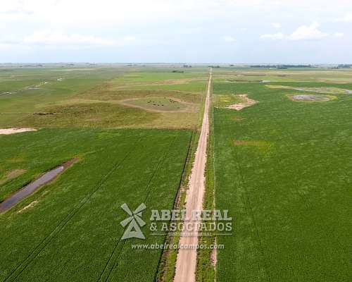 Campo Agrícola Zona Junin-rafael Obligado