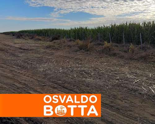 Oportunidad: 400 Has, Colonia Baron, la Pampa
