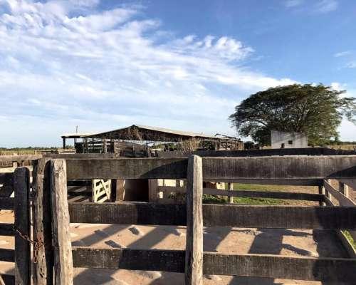 Campo Ganadero a 100 km de Ciudad de Corrientes