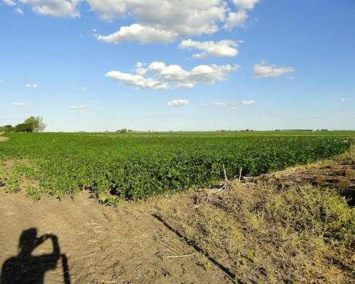140 Has Agrícolas en Gualeguaychú con Mejoras
