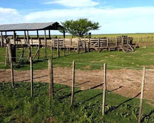 1850 Has Ganaderas, Rincón de Nogoyá, Gualeguay, Entre Ríos.