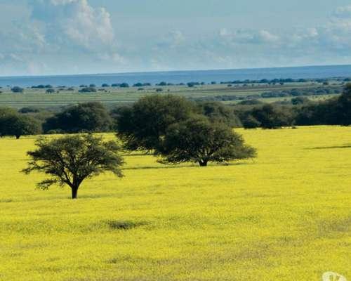 Vendo Campo en Caleu-caleu la Pampa -
