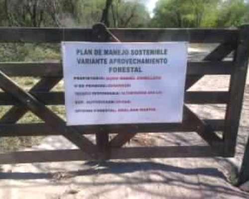 Forestacion de Algarrobos en General San Martin
