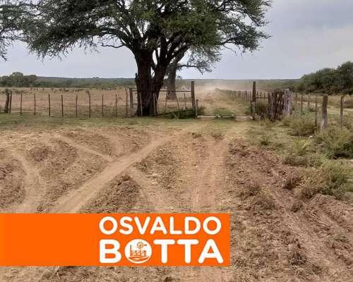 780 Has en Toay, la Pampa