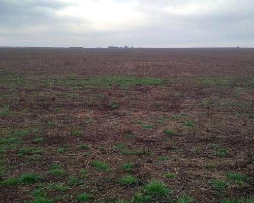 Vendo 615 Has Agricolas en Castex la Pampa