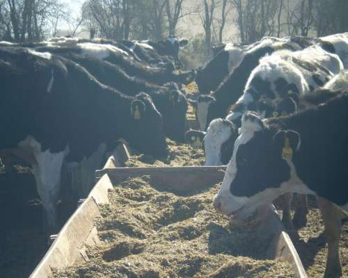 Comedero Batea Madera 5m X 1.10m P/20 Vacas Tambo Sept 2019