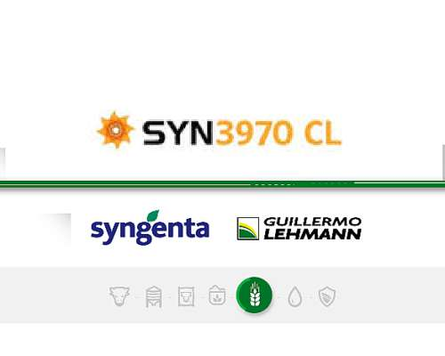 Syn 3970 CL - Híbrido de Girasol Syngenta - Semillas