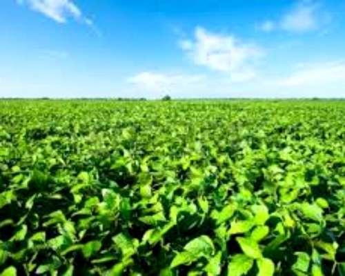 Aldao Provincia Santa FE 50 Hectáreas Agrícolas