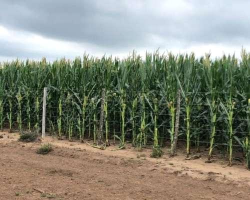 1800 Has Mixtas - 70 % Agrícola - 30% Ganaderas