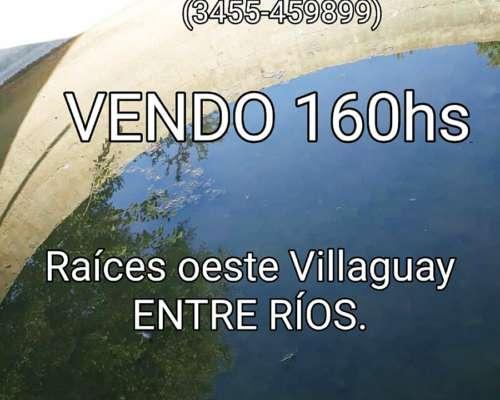 Vendo Campo, 160h ,apto Ganadería.