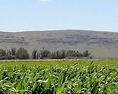 30 Has.agrícolas Aptas Granja.balcarce