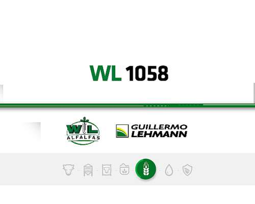 Alfalfa WL 1058 - Semilla Forrajera