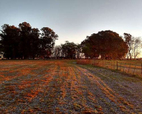 80 Hetáreas Agrícolas 100% en del Carril