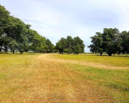 800 Has Campo Agrícola Ganadero Sobre Ruta en Entre Rios