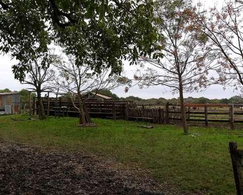 Campo Mixto en San José de Feliciano. 685 Hectáreas.