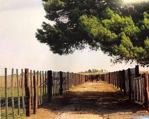 Partido de Saavedra - Agrícola S/ruta - Venta