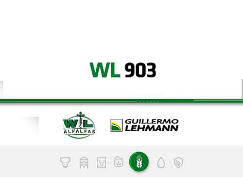 Alfalfa WL 903 - Semilla Forrajera