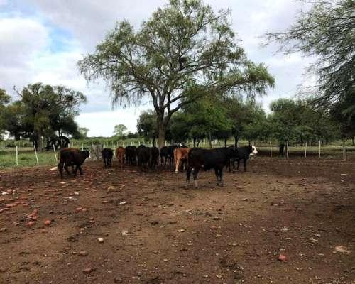 Estancia Sobre Ruta 34 Santiago del Estero