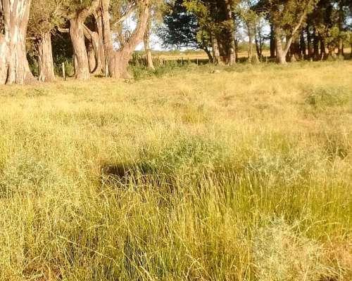 Campo Mixto en Lobos