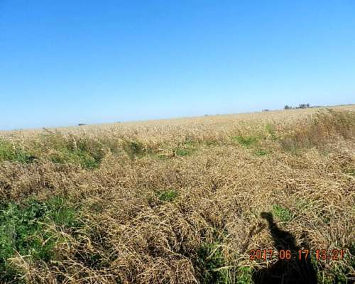 400 Has Agrícolas en Alpachiri Gran Oportunidad de Negocio